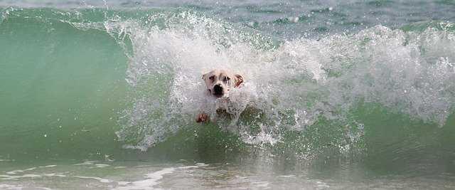 dog swimming in the sea