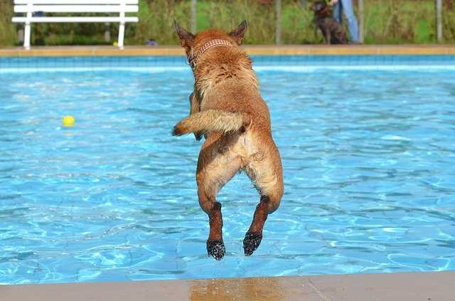 water games for dogs