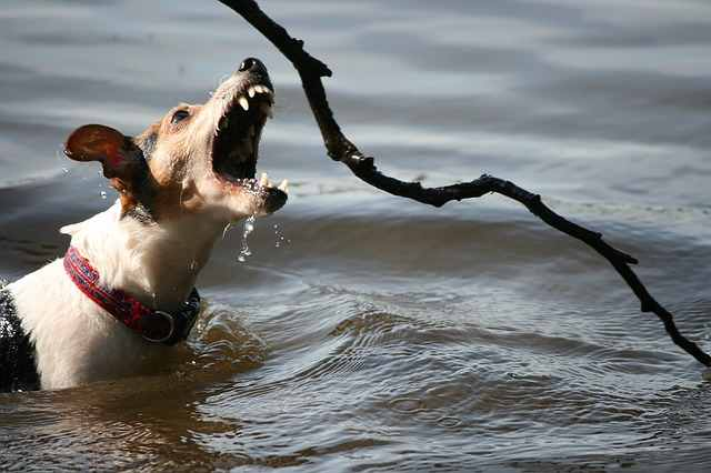 terriers that don't like water